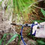 О вреде ловчих (клеевых) поясов на плодовых деревьях