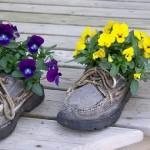 Цветок растёт в ботинке