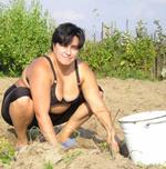 Когда копать картошку?