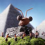 Муравьям каюк - избавляемся от муравьёв