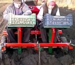 Посадка картофеля трактором без картофелесажалки