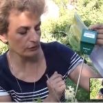 Как определить кислотность почвы подручными средствами?