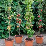 Когда сажать саженцы плодовых деревьев, осенью или весной и почему они не принимаются?