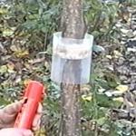 Ловчий пояс или барьер от муравьёв