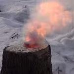 Удаление пней срезанных деревьев