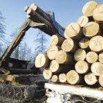 Определение кубических метров круглой древесины