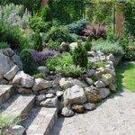 Выбор растений для каменистого участка
