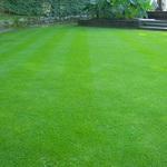 Только газонная трава и ничего больше!