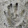 Цементные предприятия объединятся в холдинг