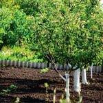 Посадка деревьев. Выращивание ягодных культур на ограниченной площади