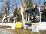 Как приготовить побелку для фруктовых деревьев?