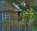 Домик в деревне - где и почем...