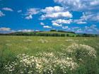 Покупка земли в Беларуси не пользуется популярностью