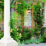 Выбор растений для вертикального озеленения