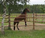 Самый простой забор из жердей